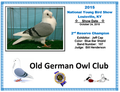 2014 NYBS 2nd Reserve Champ - Old German Owl Pigeon